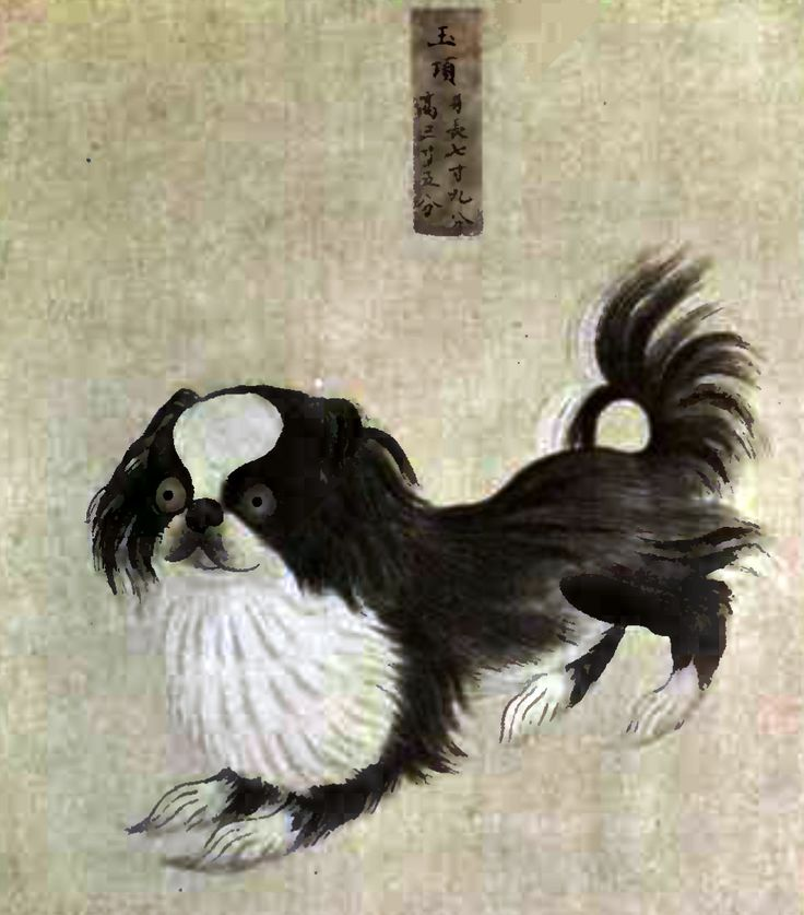 Pekingese Dog from an Imperial Dog Book by an unknown Painter (Collier)