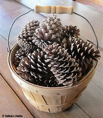 Pine Cones in Half-Peck Basket. Purchase the cones from www.selinasherbs.com Pine Cones for Sale for Craft and decoration