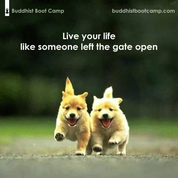 Live Like Someone Left The Gate Open Quote: Pin By Jolanda Eenkhoorn On Beautiful Quotes And Pictures