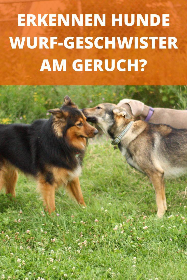 Wie Lange Wachsen Hunde