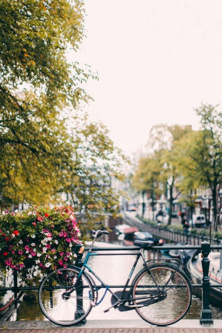 Dit jaar vier jij samen met jouw vrienden of familie kerst in alle luxe in Amsterdam. Je overnacht in het prachtige 4**** Hotel Corendon Vitality dicht bij het centrum van Amsterdam. Je krijgt daar ook nog eens ontbijt en een 4-gangen diner bij! https://ticketspy.nl/deals/kerstarrangement-amsterdam-prachtig-4-hotel-ontbijt-4-gangendiner-va-e79/