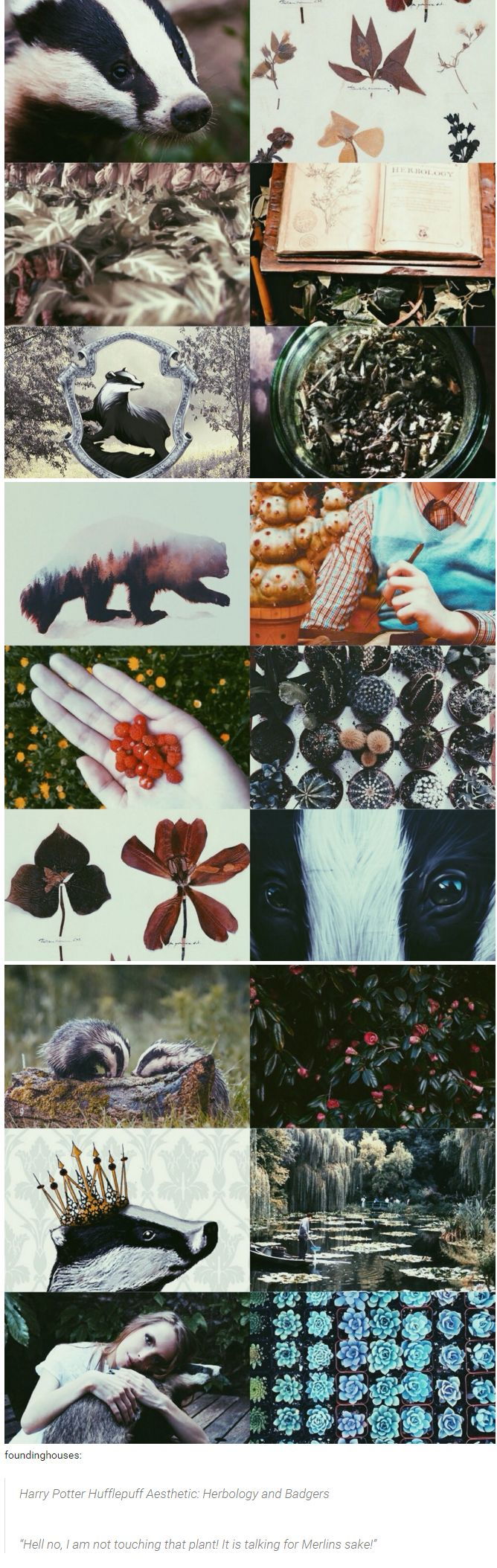 "foundinghouses: Harry Potter Hufflepuff Aesthetic: Herbology and Badgers | ""Hell no, I am not touching that plant! It is talking, for Merlins sake!"""