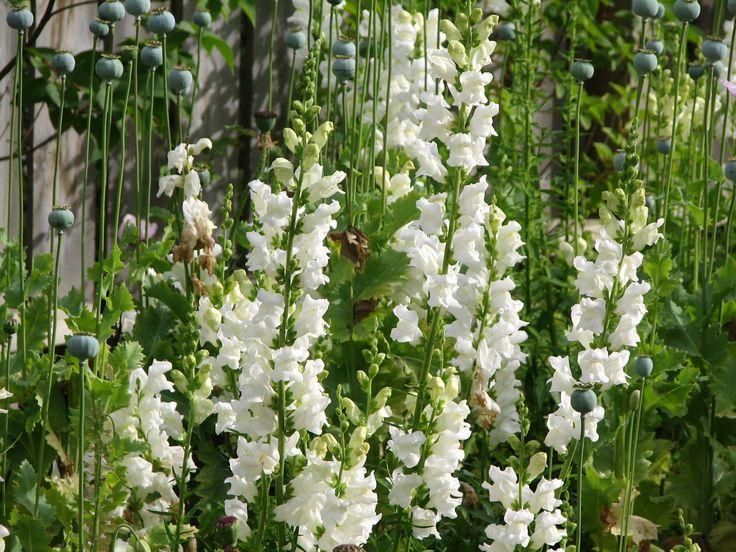 Alaska plants flowers alaska