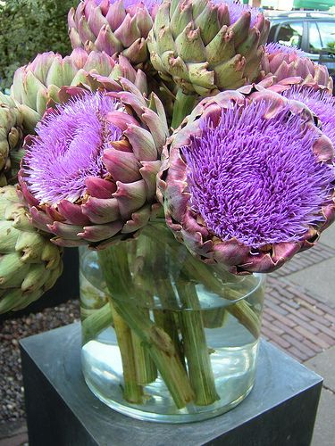 artichoke flowers. great as a purple centerpiece