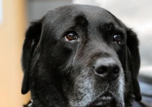 A blind man who tumbled off a subway platform and into the path of an oncoming train gave an emotional thank you Wednesday to the loyal guide dog who stayed by his side throughout the terrifying ordeal.