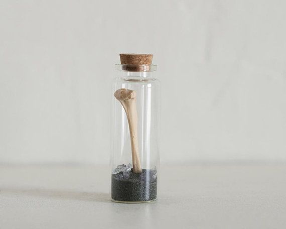 Terrarium Bottle, Bottle Terrarium, Jar Terrarium, Taxidermy Terrarium, Nature Lover, Taxidermy Gift, Real Animal Bones, Nature Gifts, Goth