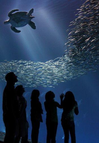 #Turtle at @Monterey Bay Aquarium #monterey bay #aquarium