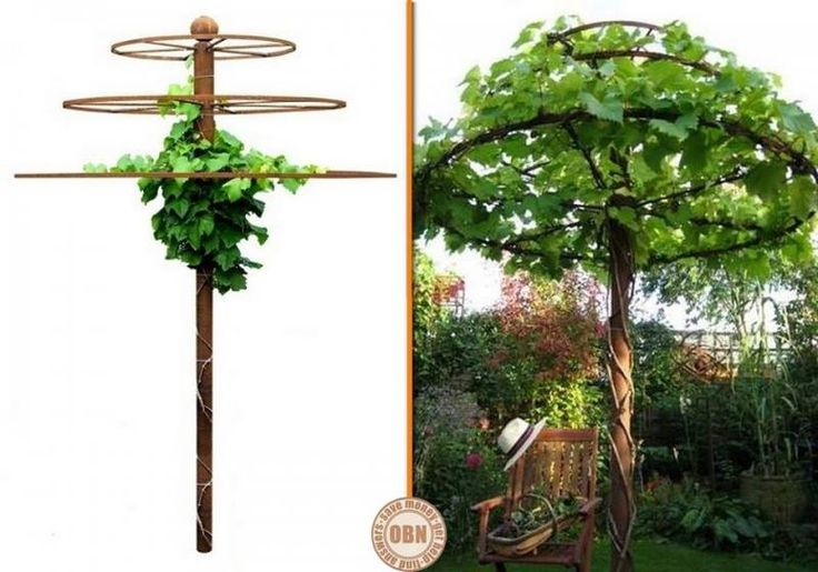 This would work great for my grapes and hardy kiwis