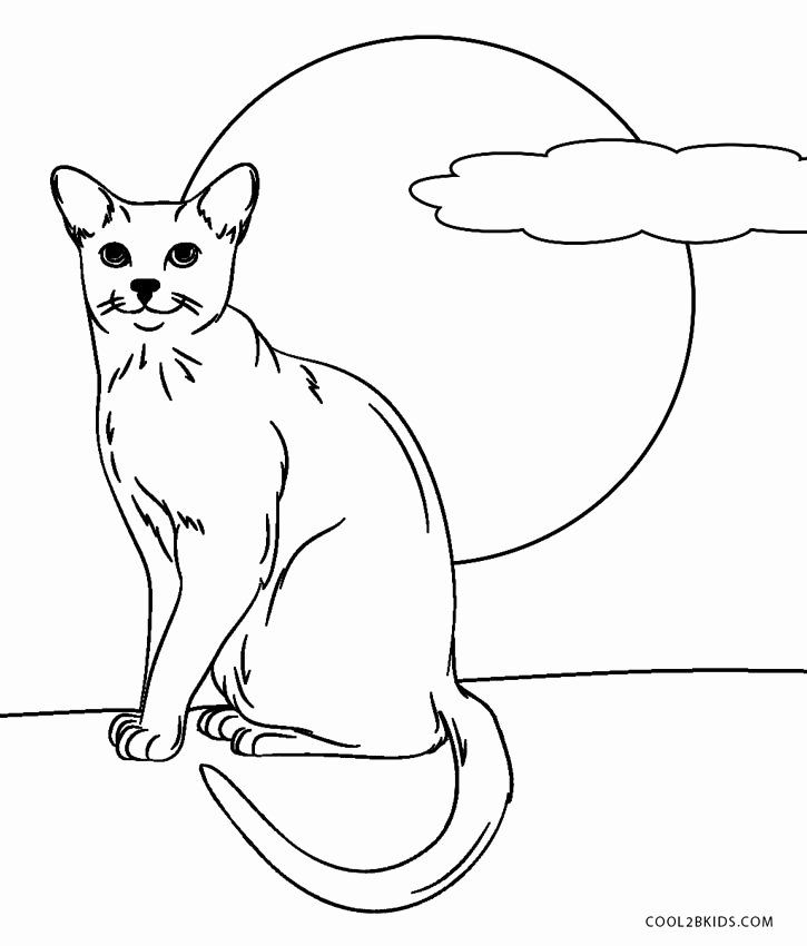 30 Coloring Pages Black Cat | Cat coloring page, Halloween ... | 850x725