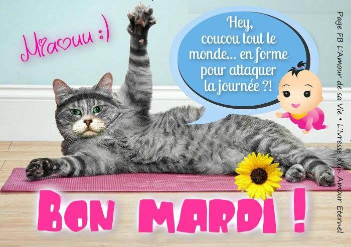 Miaouu :) Bon Mardi ! Hey, coucou tout le monde... en forme pour attaquer la journée ?!
