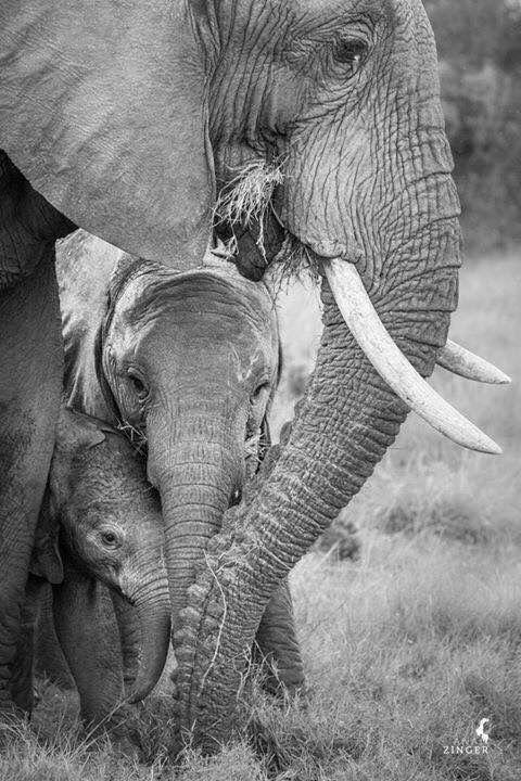 Three sizes of elephants ❤️