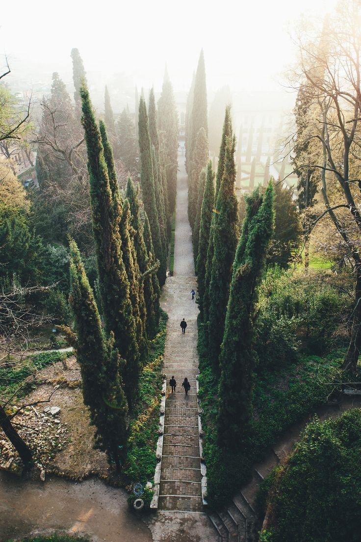 Brick steps and trees // Verona, Italy