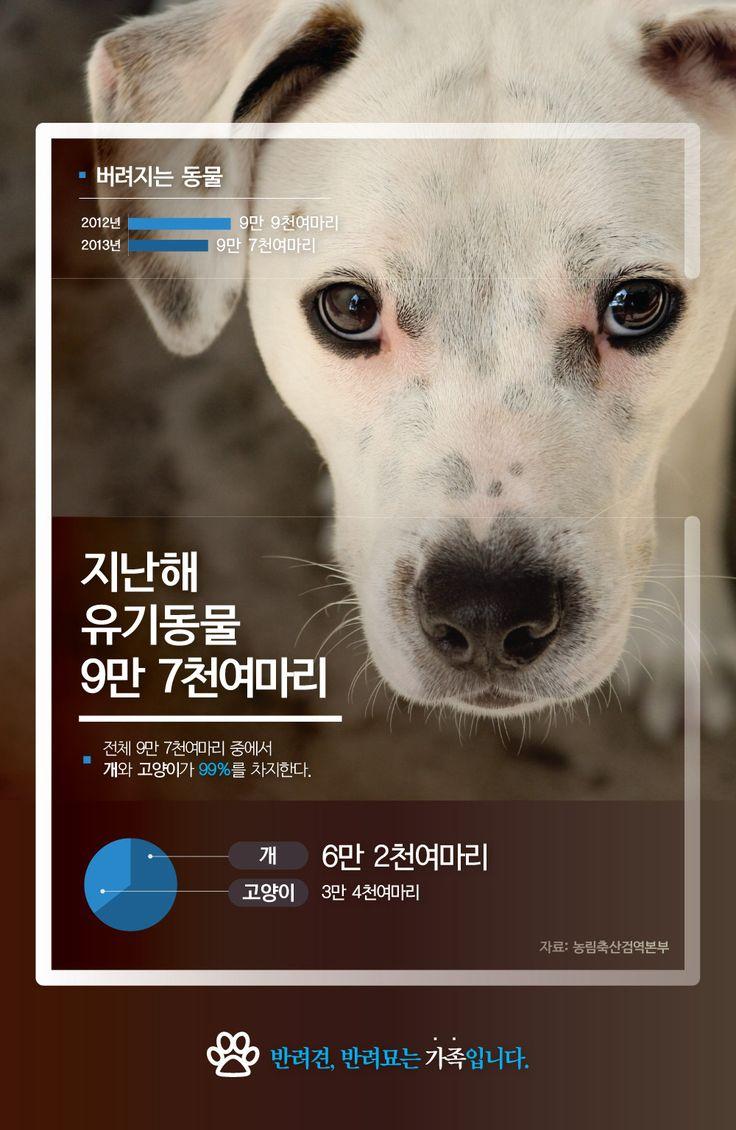 갈길 먼 우리나라의 동물복지…길가에 버려진 유기동물들 [인포그래픽] #StrayAnimals / #Infographic ⓒ 비주얼다이브 무단 복사·전재·재배포 금지