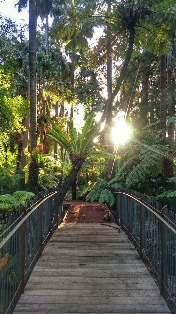 Fern Gully, Melbourne Royal Botanic Gardens