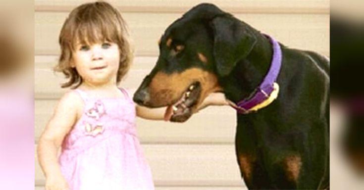 """Algumas pessoas não gostam de adotar cachorros adultos, pois pensam que eles não se vão adaptar como os filhotes, muito menos quando esses cães são de raças """"perigosas"""", como os Dobermann. Existe gente que ainda tem esses preconceitos. Mas a verdade é que a única """"raça perigosa"""" é a humanidade. Para além disso,os cães adultos … Continued"""