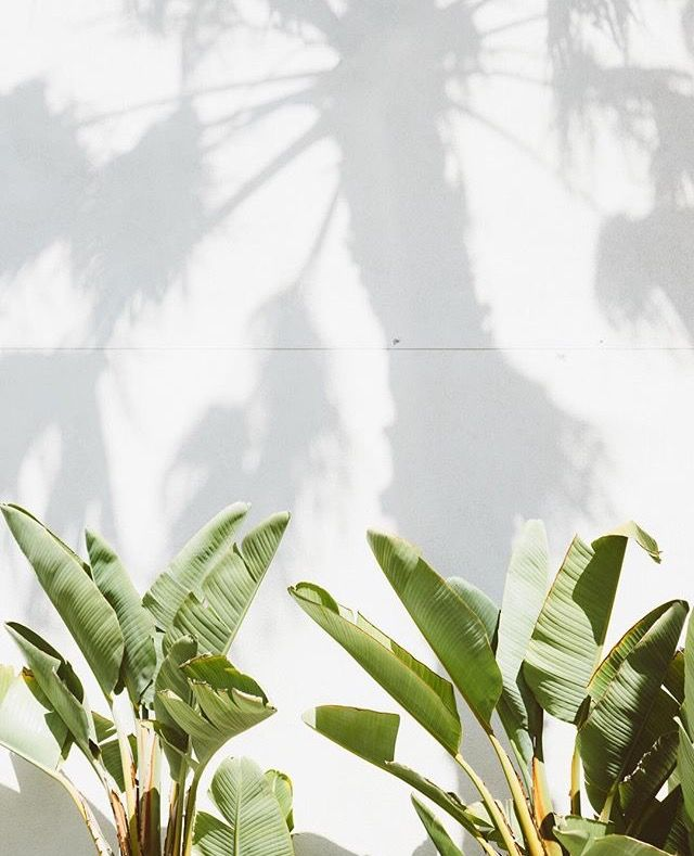 entracing palm tree type house plant. Green PlantsSun  1029 best G R E N S images on Pinterest Plants Leaves and Nature