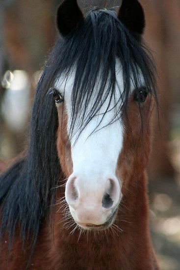 That face!!! My mustang had a bald face like this beauty except she was black bay instead of bay.