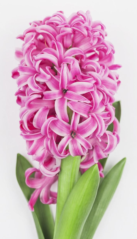 November wedding flowers in season best fall wedding ideas on jardinfd florist hyacinth colors pink white yellow peach lavender blue mightylinksfo