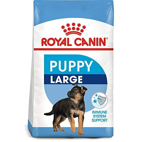 Best Food For German Shepherd Puppies Here Is How To Treat Them
