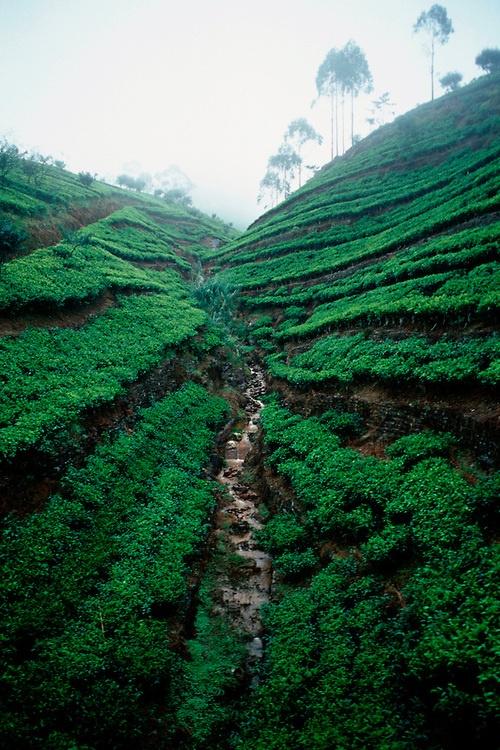 78 Images About Natural Beauty Of Sri Lanka On Pinterest Lakes Sri Lanka And Rainforests
