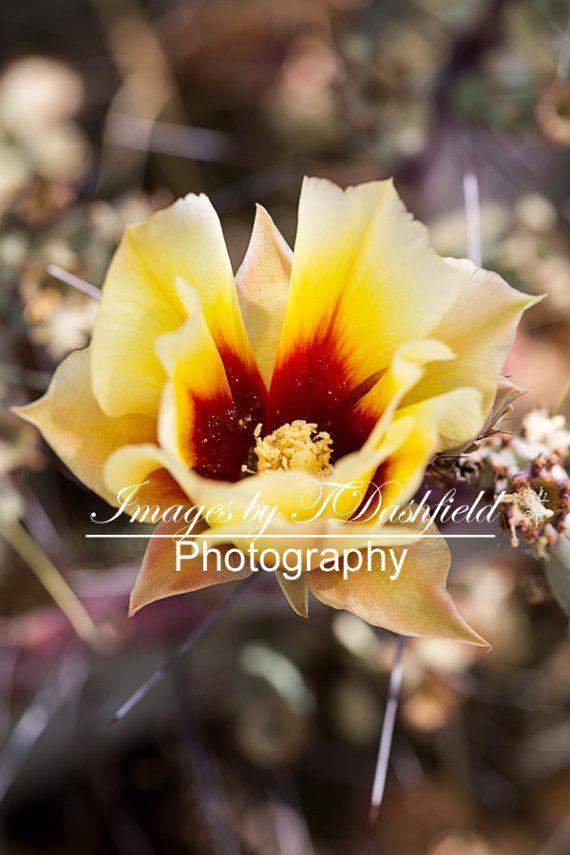 Cactus Flower Southwestern Art Fine Art by ImagesbyTDashfield