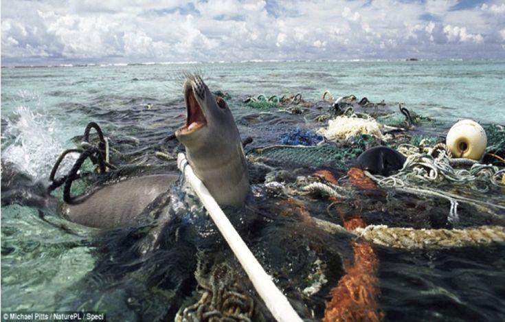 El Plástico Mata Animales | El Plástico Mata