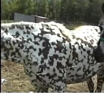 Foundation Appaloosa - I've never seen this pattern before