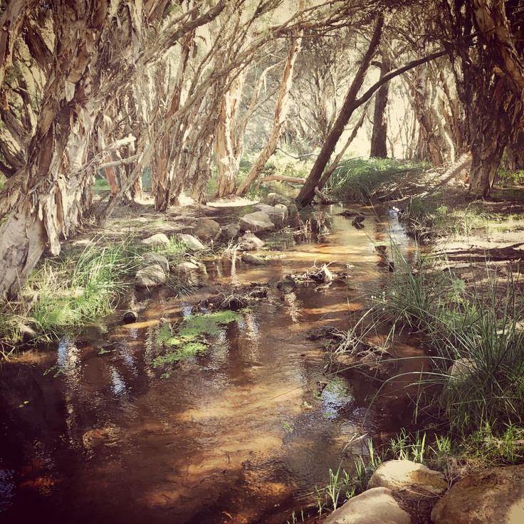 "63 Likes, 1 Comments - Angy Braine (@anthesisbotanicals) on Instagram: ""🙌🏻🌿🌲🌾🌤✨🙌🏻 #anthesisbotanicals #nature #australia #australianbush #riversandstreams #outandabout…"""