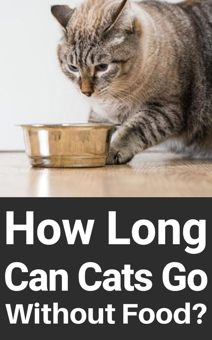 How Long Can Cats Go Without Food In 2020 Cat Health Cats Kitten Health