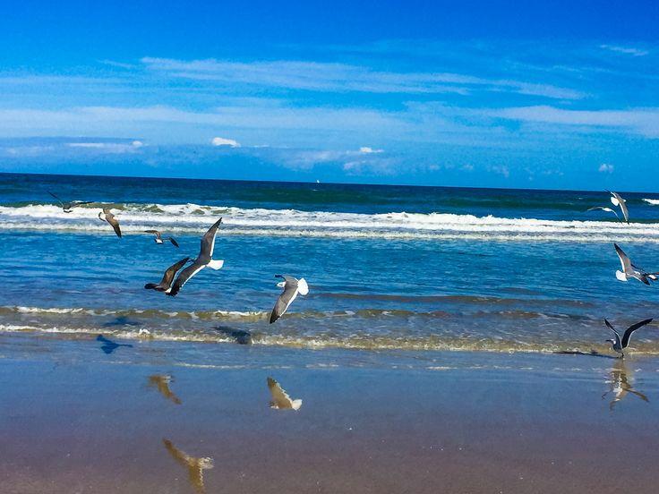 Mejores 7 imágenes de Daytona Beach and other beaches en Pinterest ...