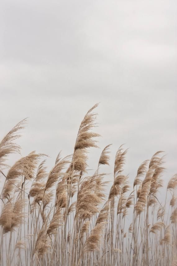 3 50 A Photography Digital Print Of Beach Grass Swaying On A Grey Winter S Day In Greece Download Print In 2020 Beach Photography Beach Wall Decor Beach Grass