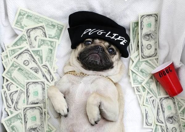 10 Stages Of The Sophomore Slump As Told By Doug The Pug