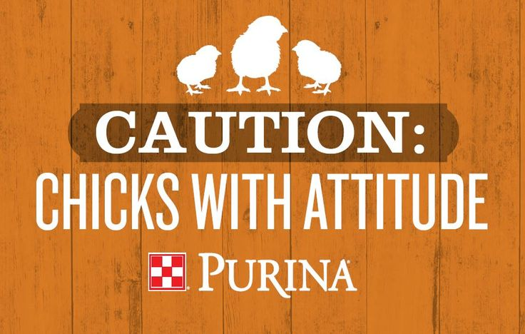 25 Best Chicken Quotes On Pinterest: 12 Best Deck Your Coop Images On Pinterest