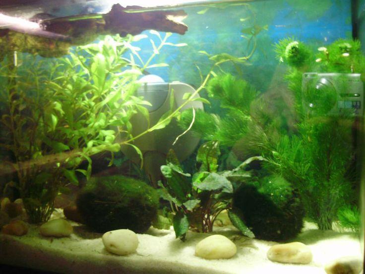 aquarium plant fish tank in pet supplies fish aquariums live plants ...