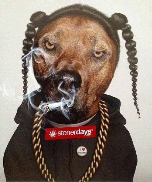 Marijuana funny photo
