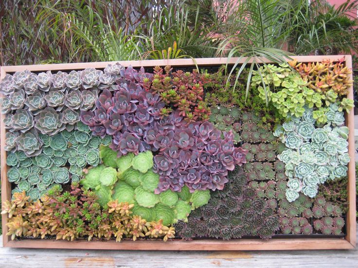 27 Best Images About Succulent Wall On Pinterest Gardens
