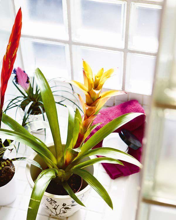 M s de 25 ideas incre bles sobre plantas de interior - Plantas de interior resistentes ...