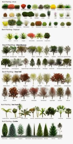Landscaping With Trees and Shrubs.