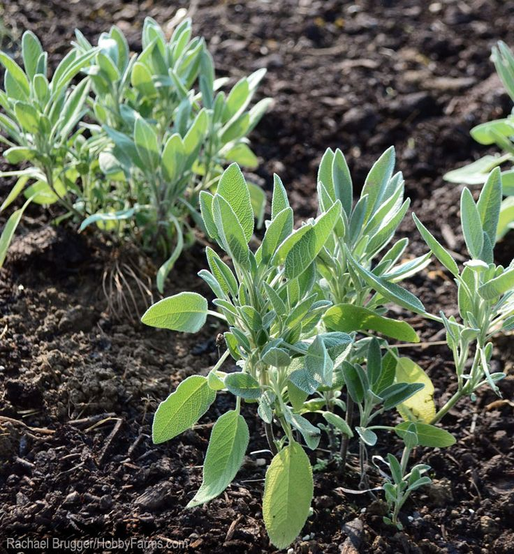 418 best images about herbs and spices benefits uses for Three uses of soil