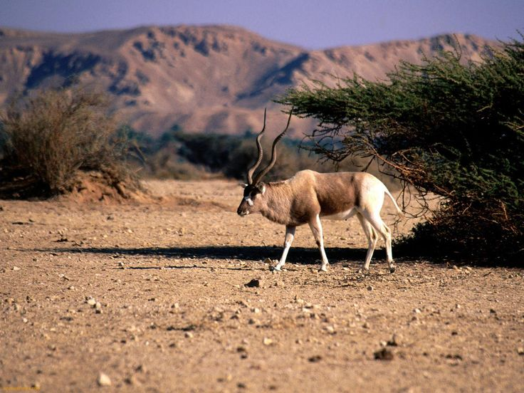 Beautiful African Animals Safaris: Animal list of Africa: Beautiful wildlife and dangerous wild animals