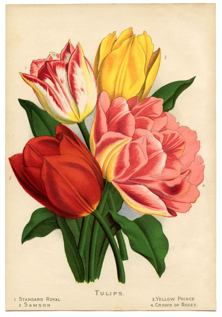 Instant Art Printable - Gorgeous Tulips - The Graphics Fairy #Printable #Vintage #Floral