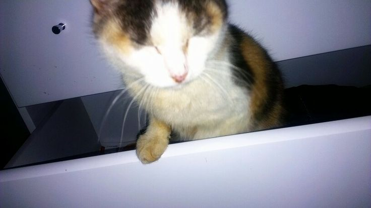 My SHANZY ♥♥♥♥♥ She loves my drawers!!!