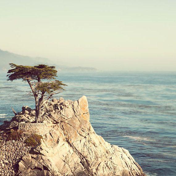 Lone Monterey Cypress Tree, California Landscape, Nature Photography, Coastal Decor, 8x8 California Print, Ocean, Summer - 17 Miles