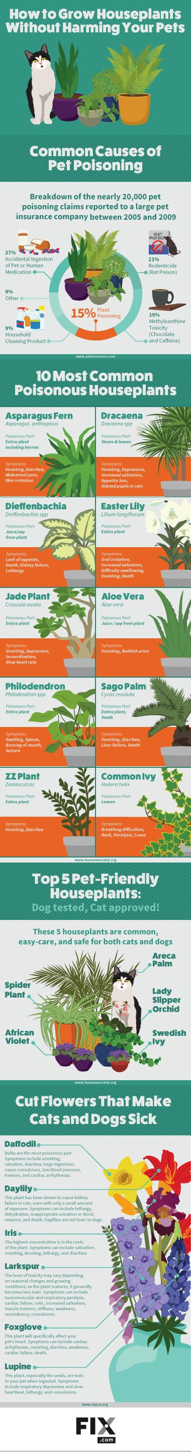 Les plantes d'intérieur qui peuvent empoisonner les chats - Houseplants Safe for Cats and Dogs | Fix.com