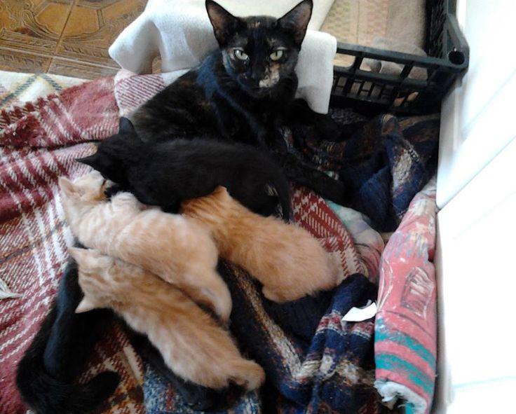 gatinhos para adopção responsavel
