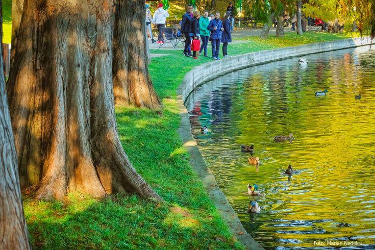 Din parcul Alexandru Ioan Cuza ( Titan / IOR ) © Marian Nedelcu