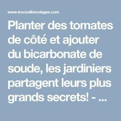 Planter des tomates de côté et ajouter du bicarbonate de soude, les jardiniers partagent leurs plus grands secrets! - Trucs et Astuces - Trucs et Bricolages