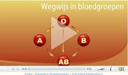 Video : Wegwijs in bloedgroepen
