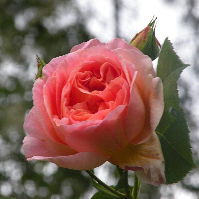 #flowers #macro #花 #زهرة #फूल #flor #une #fleur #çiçek #bloem #blomst #blume #λουλούδι #kukka #פרח #kwiat #virág #bunga #fiore #꽃 #цветок #ดอกไม้ #квітка #hoa