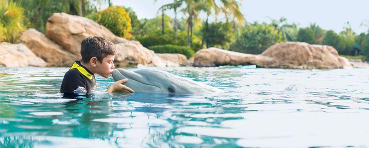 Swimming with Dolphins Tips   SeaWorld San Antonio